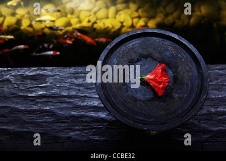 Bol en bois avec fleur rouge près de l'étang à poissons Banque D'Images