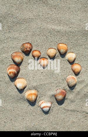 Les coquillages disposés en forme de coeur sur le sable Banque D'Images
