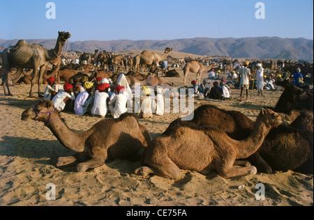 SNS 82268: chameaux assis dans le Rajasthan en Inde Pushkar foire Banque D'Images