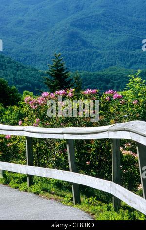 Le Blue Ridge Parkway à Jackson Co., NC, à Waterrock, bouton MP 451. Chemin pavé mène au sommet, bordée de rhododendrons