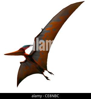 Pteranodon signifiant 'ailes' édenté a été l'un plus connu de tous les ptérosaures ou reptiles volants envergure de plus de 6 mètres 20 ft il