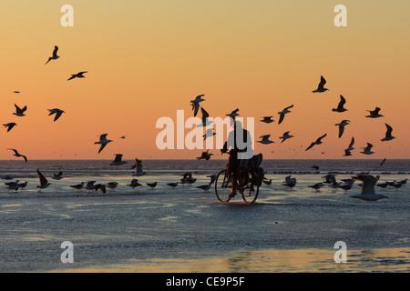 Vtt homme sur la plage à marée basse au coucher du soleil et entouré par les mouettes, Essaouira, Maroc Banque D'Images