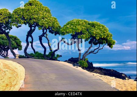 Héliotrope, arbres et océan. New York, la grande île. Banque D'Images