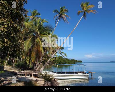 Mer de cocotiers se penchant sur l'eau et d'un bateau à quai, l'Amérique centrale, le Panama Banque D'Images
