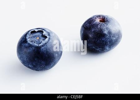 Deux Bleuets sur fond blanc Banque D'Images