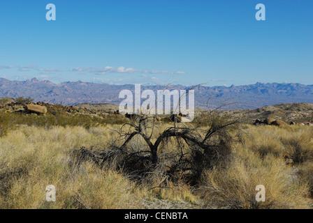 Arbre Sec et large vue sur les vallées et les montagnes lointaines, au Nevada Banque D'Images