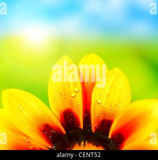 Résumé fond coloré naturel humide, pétales de fleurs marguerite jaune, macro détails Banque D'Images