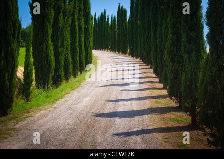 Route bordée de cyprès dans la campagne Toscane Banque D'Images