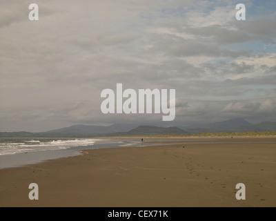 Promenade de chiens le long de la plage de sable à Harlech. Banque D'Images