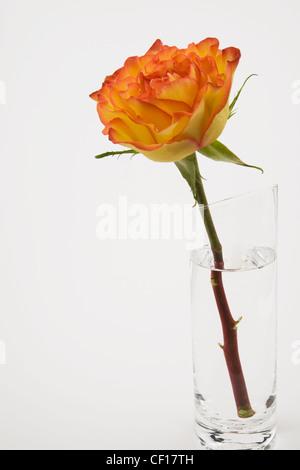 Une seule fleur dans un vase en verre sur un fond blanc Banque D'Images
