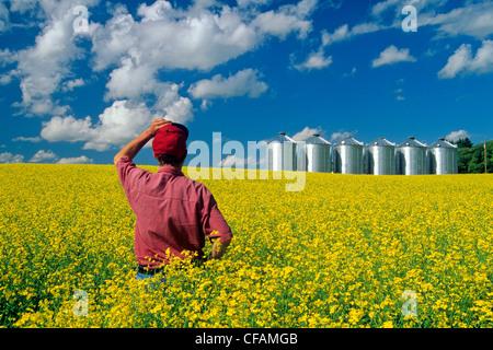 Un homme donne sur un champ de colza en fleurs avec des cellules à grains(silos) dans l'arrière-plan, près de Somerset, Manitoba, Canada