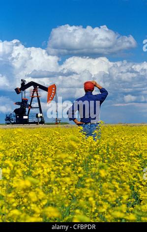 Un homme donne sur un champ de colza en fleurs avec de l'huile à l'arrière-plan pumpjack près de Carlyle, Saskatchewan, Canada