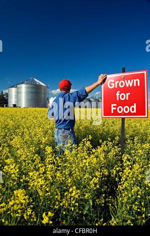 """Un agriculteur donne sur sa récolte de canola en fleurs avec 'cultivé pour l'alimentation"""" dans le champ près de Carey, Manitoba, Canada"""