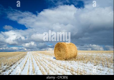 Rouleau de paille de blé, chaumes et ciel avec nuages, près de Hazenmore, Saskatchewan Canada Banque D'Images