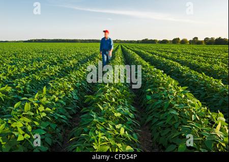 Un homme dans un champ de soja de croissance moyenne, Manitoba, Canada Banque D'Images