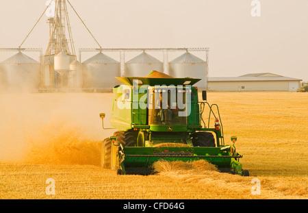 Une femme fonctionne une moissonneuse-batteuse pendant la moisson du blé de printemps près de Somerset, Manitoba, Banque D'Images