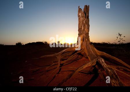 Le lever du soleil dans le parc national de Sarigua (désert) dans la province de Herrera, République du Panama.