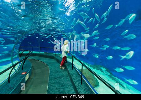 Woman at Ocean Aquarium, Shanghai, Chine, Asie Banque D'Images