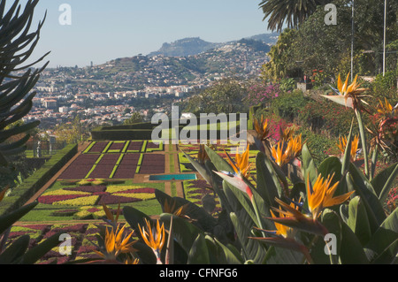 Oiseau du Paradis des fleurs, des jardins botaniques, Funchal, Madeira, Portugal, Europe, Atlantique Banque D'Images