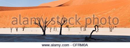Dead Vlei, Namib-Naukluft Park, Namibie Banque D'Images