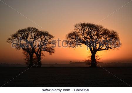 Deux arbres silhouette sur un ciel orange juste après le lever du soleil près de Godmanchester, Cambridgeshire, Banque D'Images