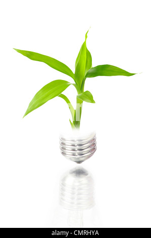 Eco concept: ampoule avec l'intérieur de l'usine isolated on white Banque D'Images