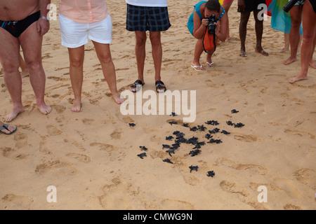 Sri Lanka - Koggala beach, village près de Galle, l'écloserie de jeunes tortues réalisé dans l'océan Banque D'Images