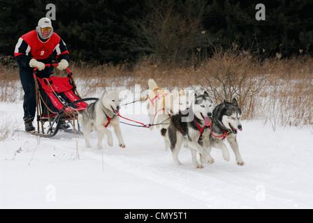 Mushing dogsleder sur le sentier de neige avec une équipe husky quatre dans une course en ontario Banque D'Images