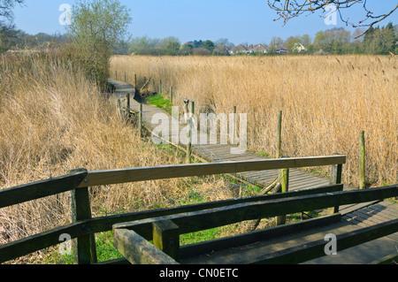 L'eau, Eling Bartley, près de Southampton, Hampshire, Royaume-Uni Banque D'Images