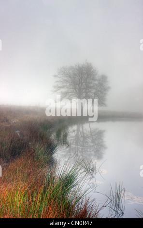 Lake dans un champ sur un matin d'hiver brumeux, Purple Moor Grass sur la rive. Banque D'Images