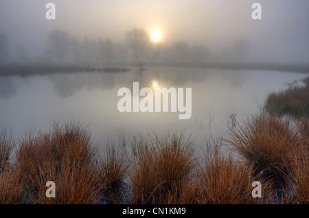 Le soleil levant reflète dans l'eau d'un lac sur un matin brumeux. Au premier plan sur le Soft (Juncus effusus). Banque D'Images