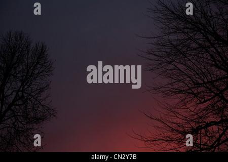 Des arbres contre le ciel rose au coucher du soleil Banque D'Images