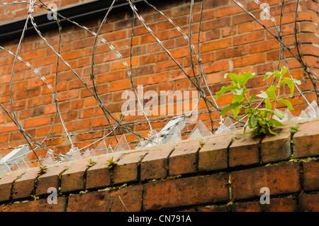 Du verre brisé et des barbelés/barbelés en haut d'un mur pour décourager des voleurs Banque D'Images
