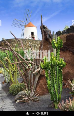 Lanzarote, Îles Canaries - le jardin de cactus à Guatiza. Vue générale avec le moulin à vent. Banque D'Images