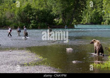 Un ours brun promenades le long de la rive du fleuve russe en tant que pêcheurs essayent de garder leur distance, Banque D'Images