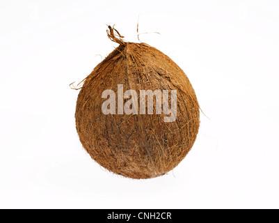 Avec enveloppe de noix de coco Banque D'Images
