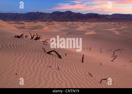 Appartements Mesquite Sand Dunes, USA, Californie, Death Valley National Park