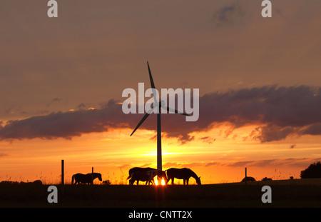 Chevaux et éolienne au coucher du soleil Banque D'Images
