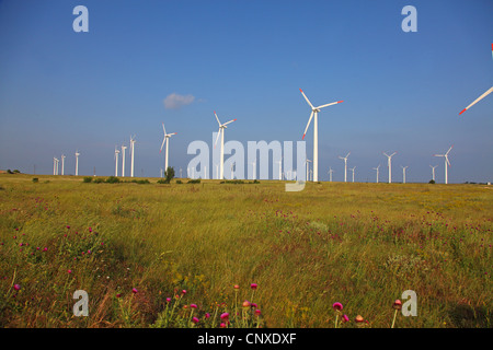 Wind farm in meadow, Bulgarie, Kaliakra Banque D'Images