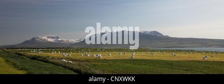 Balles d'ensilage dans les prés, l'Islande, Akureyri Banque D'Images