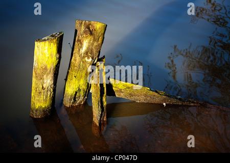 Morceaux de bois abandonnés dépassant du lac au barrage de Lymm, Cheshire, sur une soirée ensoleillée Banque D'Images