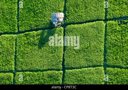 Cabane refuge dans les champs de riz paddy, vue aérienne, la région d'Arusha, Tanzanie Banque D'Images