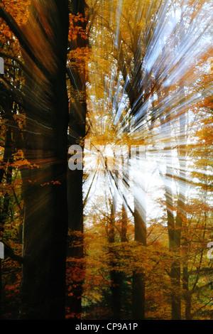 Impression artistique d'une scène d'automne dans la forêt de hêtres Banque D'Images