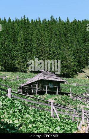 Vieux bois abandonnés Shepherd's house dans les montagnes, de l'Ukraine Banque D'Images