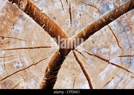 Vieille souche d'arbre fissuré Banque D'Images