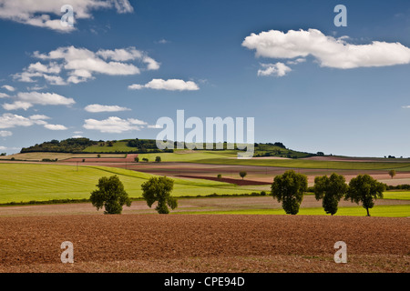 Arbres et champs en Bourgogne, France, Europe Banque D'Images