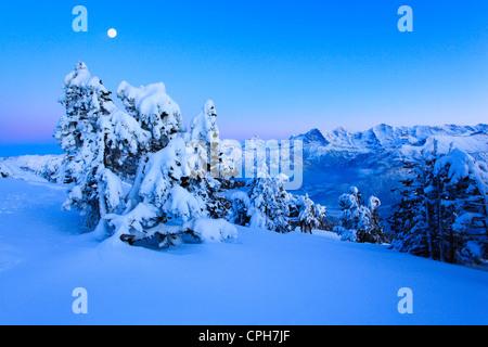 Soir, crépuscule, lumière du soir, Alp, Alpes, Alpes, vue, arbre, montagne, montagnes, montagne, paysage de montagne, Banque D'Images