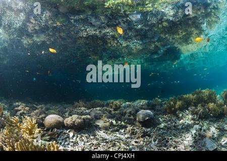 L'eau bleu sur le bord de la mangrove de récifs coralliens. Raja Ampat, en Indonésie. Banque D'Images