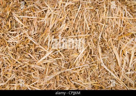 La paille d'or texture background, Close up Banque D'Images