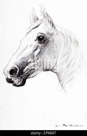 Portrait de cheval - fusain sur papier par Kurt Tessmann Banque D'Images